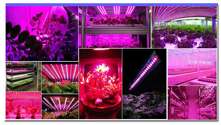 LEDqy288千赢国际灯补光灯如何对温室作物进行补光