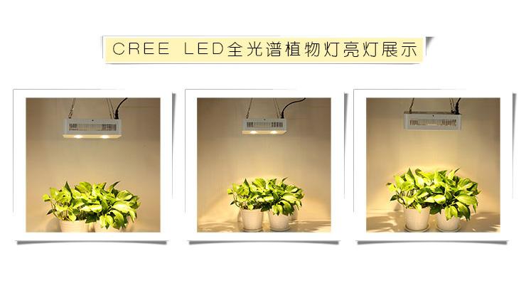CREEqy288千赢国际生长灯COB加透镜LEDqy288千赢国际灯亮灯实景展示