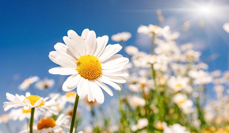 LEDqy288千赢国际灯对qy288千赢国际开花有什么影响?