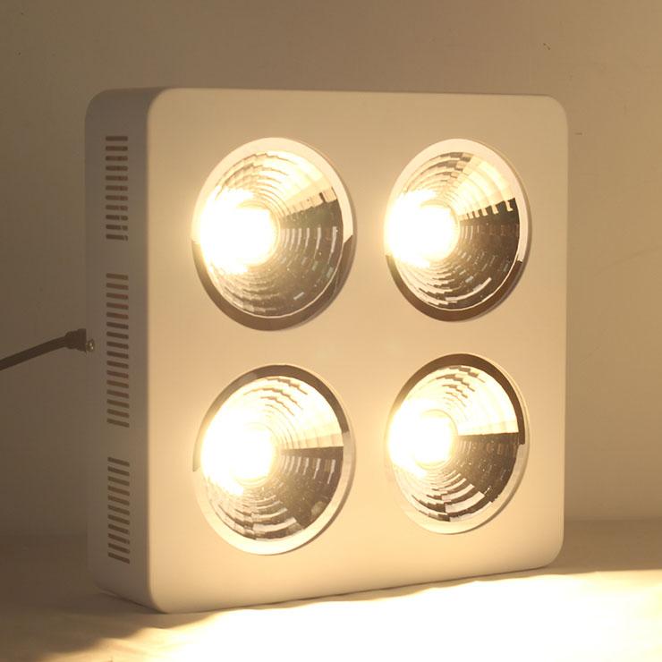CREE800Wqy288千赢国际生长灯LED反光杯qy288千赢国际灯亮灯美景图片
