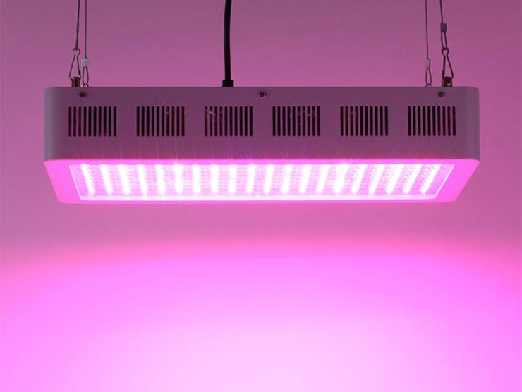 600W单颗LEDqy288千赢国际灯悬挂照射实景展示qy288千赢国际生长灯图片欣赏